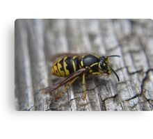 Wasp that liked me Canvas Print