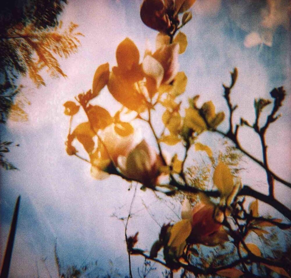 Magnolia by Sally McColl