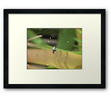 In the web Framed Print