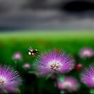 Meadow Life