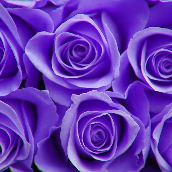 work.2159316.2.flat,550x550,075,f.purple-roses.jpg