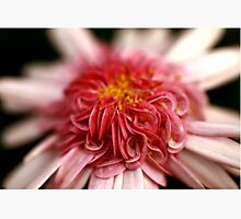 Pink Swirl Photographic Print by Stephen Mitchell