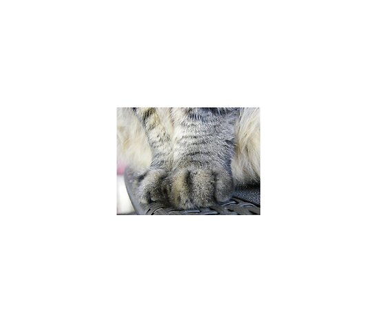 Greeting Cards, Matted Prints, Laminated Prints, Mounted Prints, Canvas Prints and Framed Prints. My cat has UGG boots for paws.. by DonnaMoore