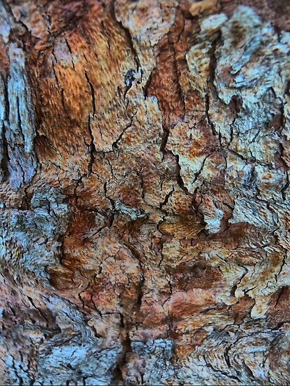 Dragon Skin - ( Bark of Euc Tree ) by Larry Davis