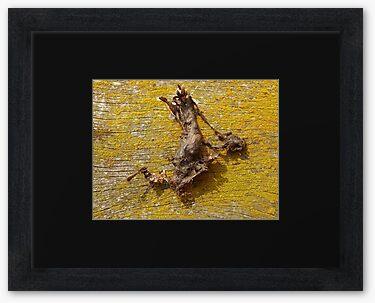 Framed print, black matte and charcoal flat frame