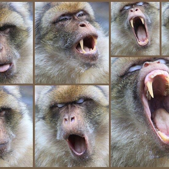 scimmia bertuccia