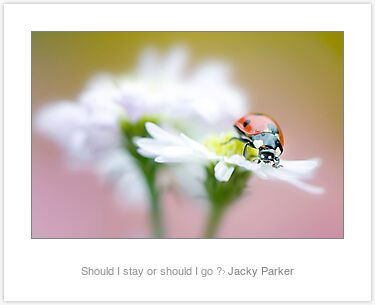Should I stay or should I go ? by Jacky Parker