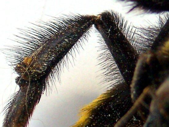 Em's sling bow Work.6100390.1.flat,550x550,075,f.bees-knees-i