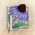 E is for Echinacea