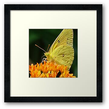 Buy Framed Prints