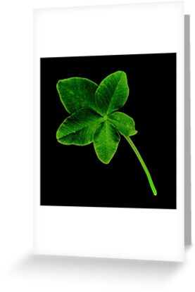 Lucky or unlucky Schoolboy finds FIVEleaf clover after