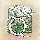 Q is for Queen Anne's Lace