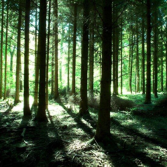 Deep Forest Work.6672477.1.flat,550x550,075,f.deep-forest