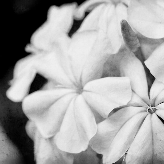 Black And White Texture. Flowers in lack and white
