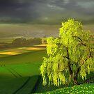 Green Beginning