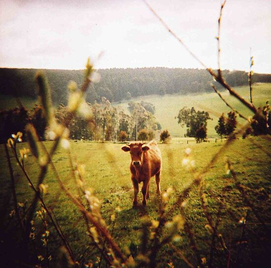 Toy Camera: Farm Girl by Sally McColl