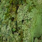 Mossy Stump by Edward Fielding