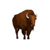 Noble Bison