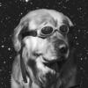 Doge21