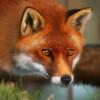 Foxlindesigns