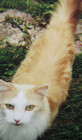 abigcat