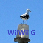WilWil-G