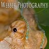 Bruce Webber :: Webber Photography
