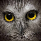 Owl-Images