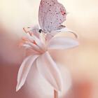 Butterfly-Dream
