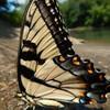Lonedragonfly