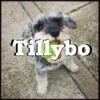 Tillybo