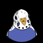 Bluey-Boronia