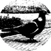 izzykjb