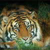 Tigerspace