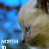 north10creation