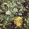 threegreenbees