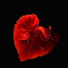 Red Beta heart by Philipe3d
