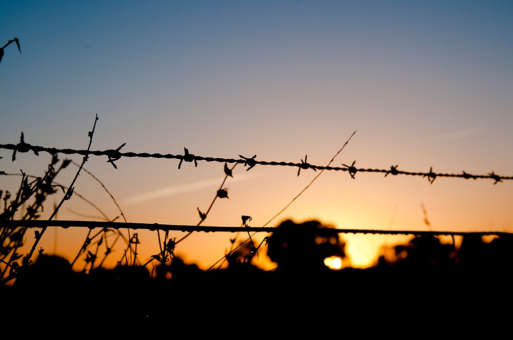 Barbed morning by Caz F