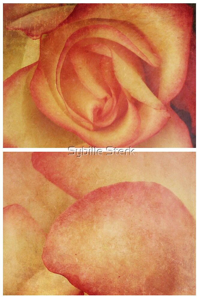 Spring - Roses - Happy Birthday I by Sybille Sterk