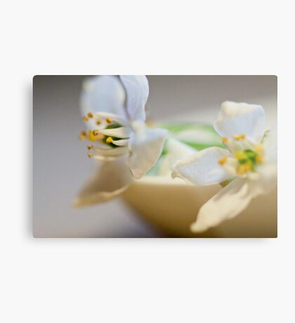 white flowers in repose Metal Print