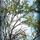 Holga Tree by Shara
