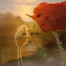 Dreaming of Poppies by Leslie Guinan