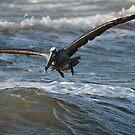 Skimming the Waves by KatsEyePhoto