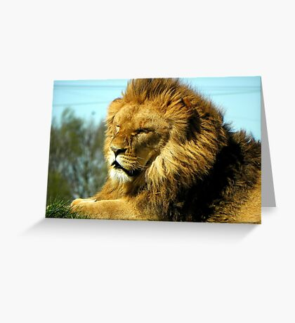 Lazing On a Sunny Afternoon  Greeting Card