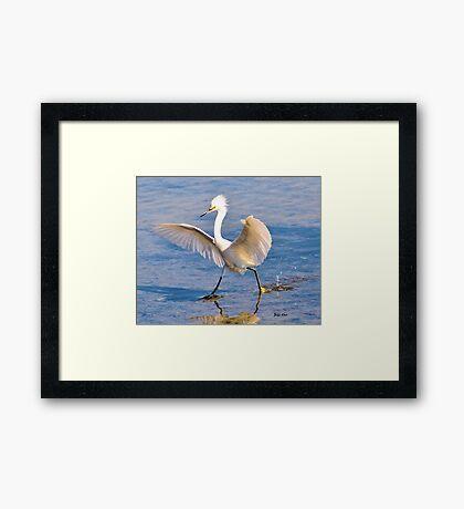 A Dancing Snowy Egret Framed Print