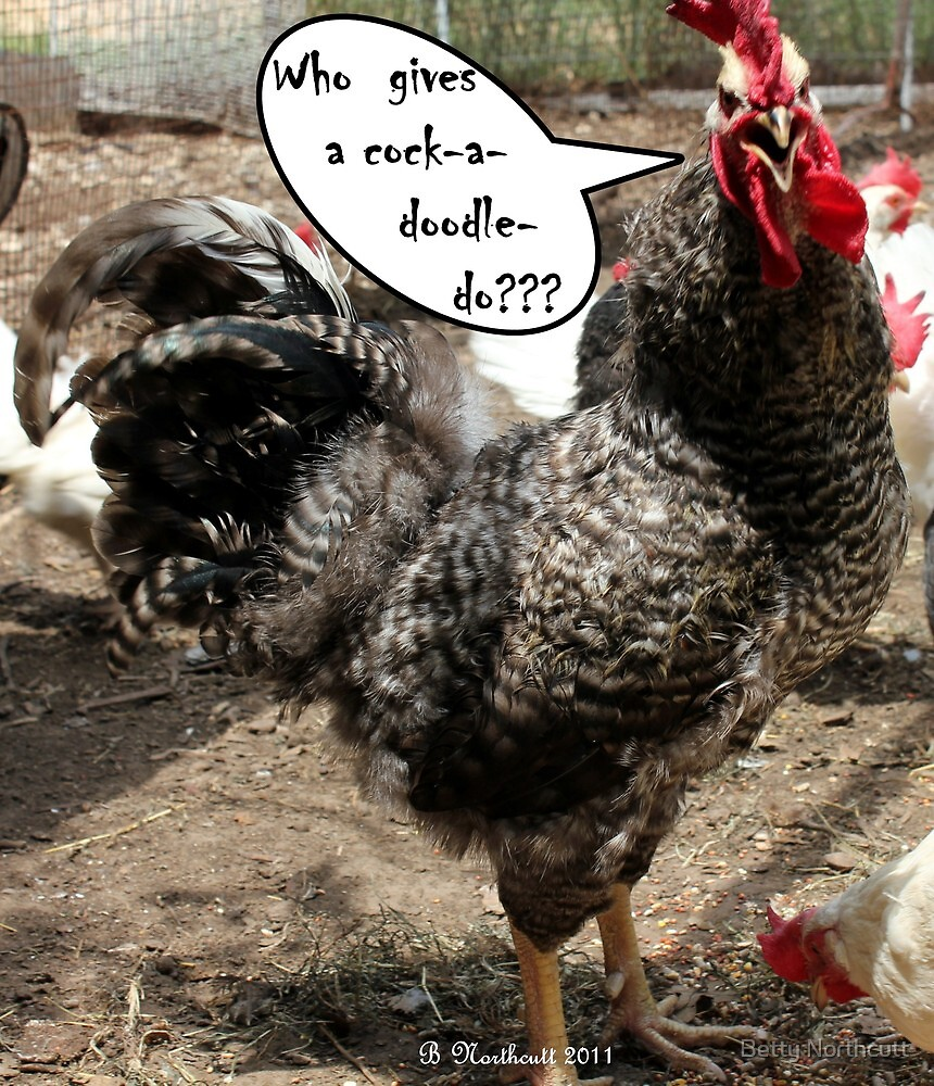 Who Gives A ... - Rooster with an attitude by Betty Northcutt