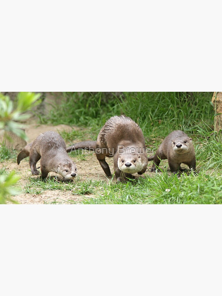 Otters together by dailyanimals