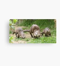 Otters together Canvas Print