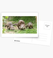Otters together Postcards