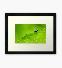 Small Life..Big World Framed Print